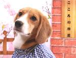 犬の幼稚園Cocoro