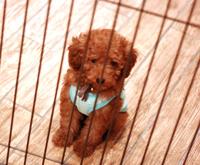 犬の保育園 犬の幼稚園Cocoro