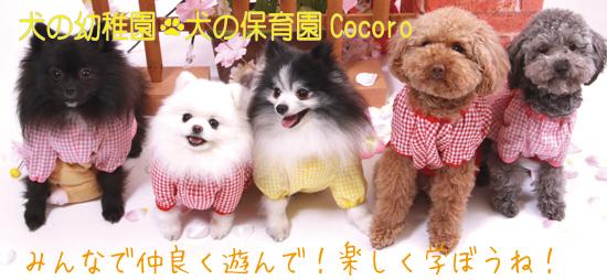犬の幼稚園 大阪 池田 箕面 豊中 川西 伊丹 西宮