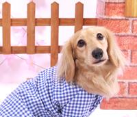 犬の幼稚園コース 料金