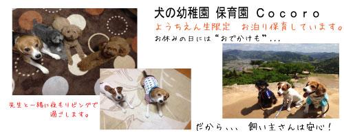 ペットホテル 川西 大阪